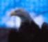 AV EAGLE Icon