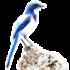 Bluejay Icon