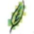 NaturCalendar Icon