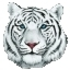 WhiteTiger Studio Icon