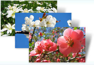 Czech Spring Theme for Windows 7 Screenshot